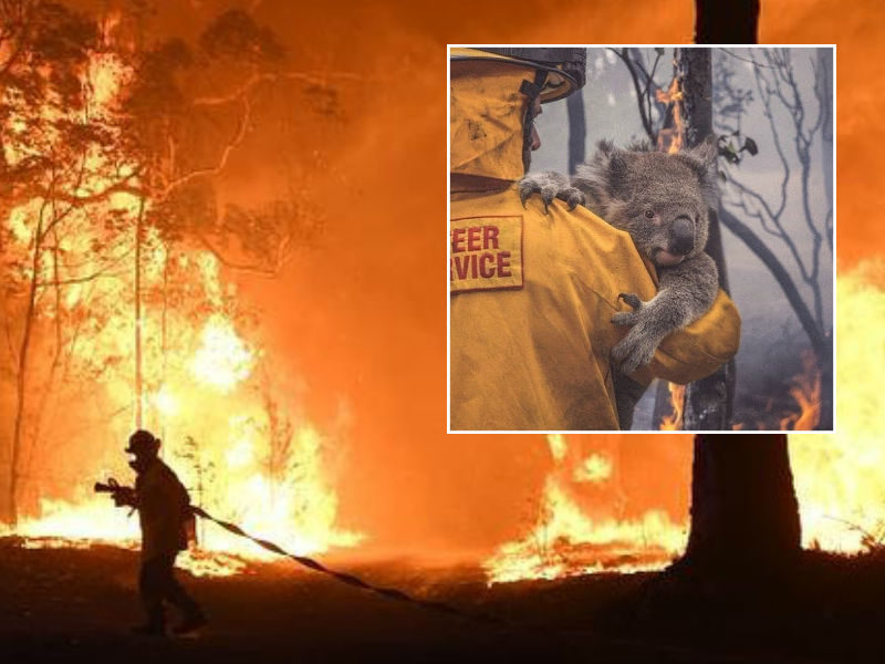 Supporting the Victims of Australian Bushfire